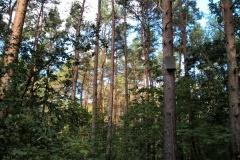 Baum11