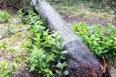 Baum15